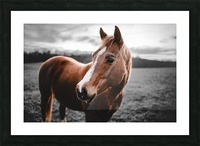 Shining Horse Picture Frame print