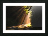 Morning Rays Picture Frame print