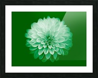 Dahlia on Green Picture Frame print