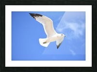 Seagull Overhead Picture Frame print