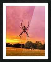 Banana Spider in Cat Spring TX Picture Frame print