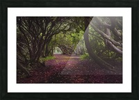 Rhododendron arched walkway Picture Frame print