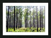 Forest Escape Picture Frame print