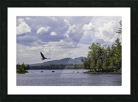 Eagle on Lake Picture Frame print