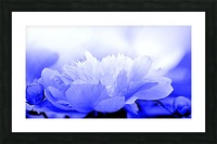 Heavenly Peony Blue Picture Frame print