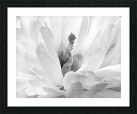 Peony III Black and White Picture Frame print