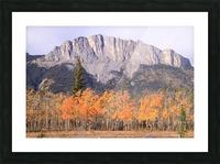 Yamnuska In Fall IMG_3238_1  Picture Frame print