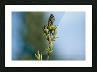 Wild Flowers 3 Picture Frame print