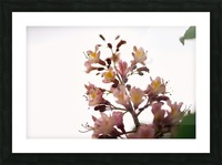 Wild Flowers 2 Picture Frame print