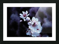 Night Flowers Picture Frame print