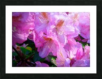 PINK FLOWER Picture Frame print