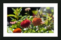 Gorgeous Flower Color Picture Frame print