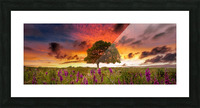 Foxgloves at sunset Picture Frame print