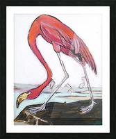 Louisiana Flamingo Study on Wood Picture Frame print