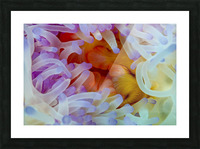 Sea Anemone 5 Picture Frame print