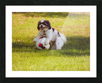 Ball Humpin Picture Frame print