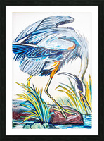 Louisiana Blue Heron Catching Fish- Bright Picture Frame print