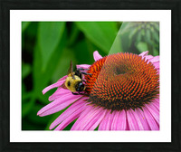 Bee Picture Frame print