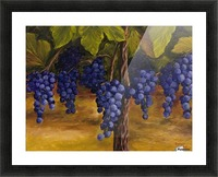 On The Vine Picture Frame print