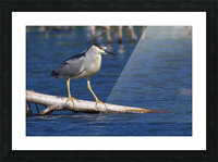 Balancing act Picture Frame print