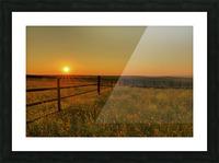 Cattle Pens Morning Sunburst Picture Frame print