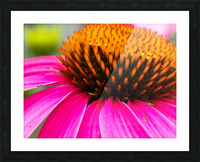 Cone Flower Picture Frame print
