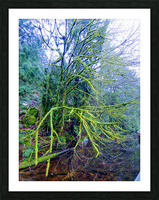 MOSSY BRANCHES Picture Frame print