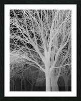 Ghost Trees Picture Frame print