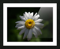 marguerite Picture Frame print