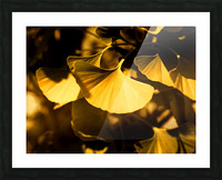 Ginkgo Picture Frame print