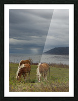 Chevaux Picture Frame print