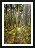 Mossy Forest Morning Picture Frame print