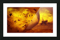 Ancient Insects Trapped in Amber Picture Frame print