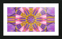 Lotus In The Pink 4 Picture Frame print