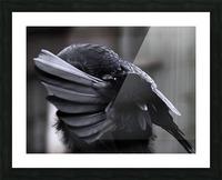 La corneille Picture Frame print