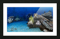 Sea Turtle Picture Frame print