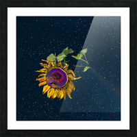Sunflower in Space Picture Frame print