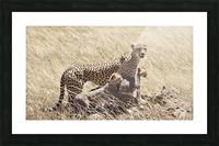 Mama Cheetah Picture Frame print
