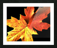 Fall Maple Leaves 3 Picture Frame print