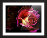 Textured Rose Picture Frame print