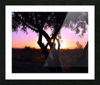 Tamarisk Sunset Picture Frame print