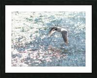 Sparkling Gull  Picture Frame print