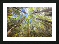 Forest Particles Picture Frame print