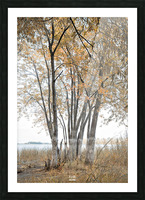 Lumiere automnale 2 Picture Frame print