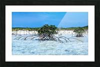 Mangroves in Estuary Picture Frame print