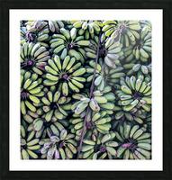 Havana III Picture Frame print