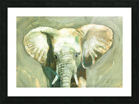 Young Elephant  Picture Frame print
