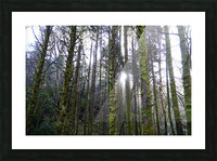 Trees of the Killarney National Park Co. kerry Ireland Europe 2018 Picture Frame print