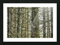 Trees in forest Mauricie National Park Quebec Canada Picture Frame print