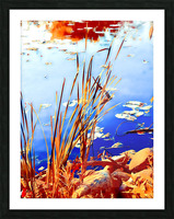 Reed Grasses  Picture Frame print